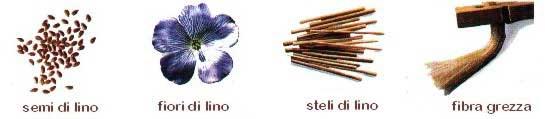 Caratteristiche del lino